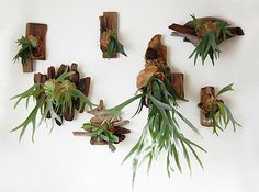 Staghorn Fern - Basically a vegetarian-friendly version of a moose head on the wall. So cool. One thing to keep in mind is that you should be regularly soaking the mount to give the fern enough moisture.