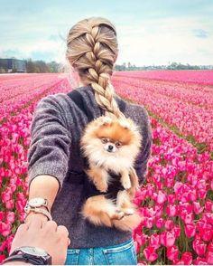 Pomeranian, Dog, Pomeranian puppie, sleepy, cute dog, sleepy dog, dog heaven, dog accessories, dog love