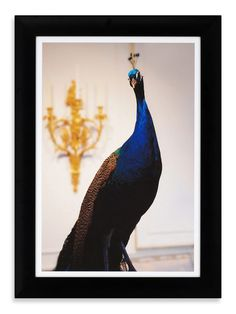 Peacock Print by SHINE by S.H.O on Gilt.com