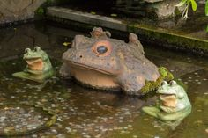 A temizuya in the garden of the Tenryu-Ji Temple (天龍寺) in Kyoto. Notice the frogs and coins littered in the water. The presence of frogs is considered to bring good fortune. Additionally, the frog has become a creature much beloved in poetry and art. Ceramic frogs are often sold at shrines as the Japanese word for 'frog' is the same as 'to return'. #TenryujiTemple, #Arashiyama, #Kyoto, #Japan, #frog,