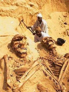 esqueletos gigantes