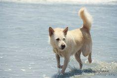 Minnie at Huntington Dog Beach!