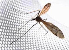 Πως θα επιλέξω την ιδανική σήτα για τον χώρο μου Insects