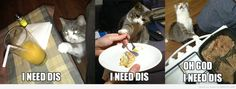 Cat Needs This, Cat Needs That.