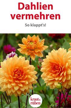 Kraut, Home And Garden, Gardening, Winter, Plants, Outdoor, Inspiration, Ideas, Flowers