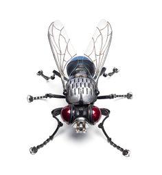 2.Fly.jpg