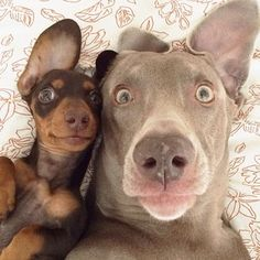 …Harlow and Sage became the world's funniest best friends… | The 50 Cutest Things That Happened This Year