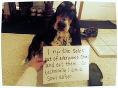 Basset Shaming - I know another puppy just like this one...