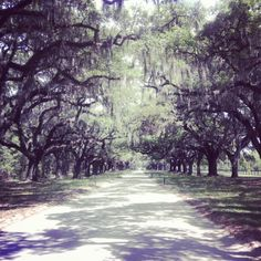 Boone Hall Plantation in Mt. Pleasant, SC