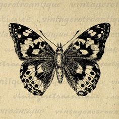 Vintage Butterfly Graphic Digital Image Butterfly Illustration
