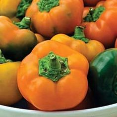 Orange You Sweet Pepper Hybrid