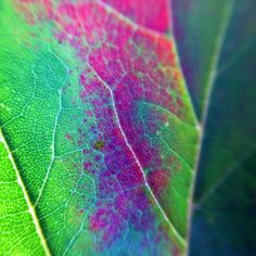 leaf close up ©BrianaLee Photography brianaleephotography.smugmug.com  macro photography, photography ideas, close up, nature, colorful