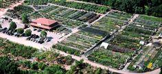 Sun's Nursery - Howard County