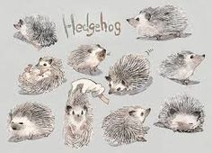 hedgehog sketches - Google Search