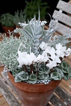 How To Make A Winter Hardy Container For The Garden. | Containers |  Pinterest | Winter, Gardens And Container Gardening