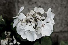 Market Dashboard - #Nature #naturephotography #brittphotog #BeautifulNature #Flowers #Plants #Gardens #gardenphotography #flowerpetals #photography #dslrphotography #canondslr #blackandwhite #onsale #stockphotography