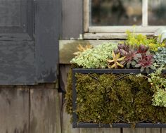Succulent Window Box at Terrain