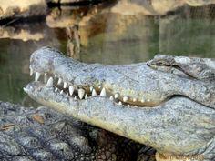 Krokodillenkreek