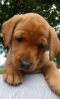 Puppies make me make girly noises...awwwww