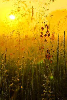 """Sunrise"" by Konstantin Kirgincev"