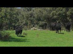 Ganadería ecológica en Red Natura. Falda Norte de la Sierra de Guadarrama