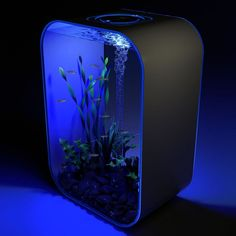 The 24 Hour Light Cycle Aquarium replicates the brightness and progression of sunlight, providing fish with a more natural, healthier habitat. Unlike the abrupt, glaring lights found on most aquariums, this model's LED gradually brightens and dims in sync with a 24-hour timer, mimicking the effects of the rising and setting sun. At night, the LED produces a warm blue hue, replicating moonlight.