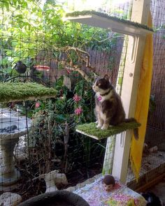 Just another Gorgeous Day on the Catio with stunning Noodle. look close the hummingbird feeder is just a few feet away,close enough for entertainment yet far enough to keep the birds safe. Here Birdie Birdie Birdie Diy Cat Enclosure, Outdoor Cat Enclosure, Pet Enclosures, Outdoor Cats, Outdoor Areas, Outdoor Rooms, Outdoor Living, Cat Cages, Cat Run
