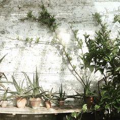 Fenton House, Glass Houses, Garden, Instagram Posts, Plants, Beautiful, Garten, Lawn And Garden, Glass House