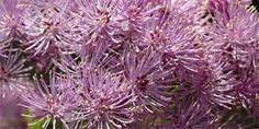 žluťucha orlíčkolistá Herbs, Plants, Catalog, Herb, Flora, Plant, Planting