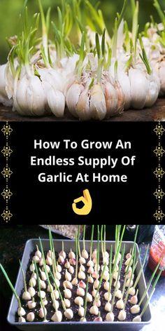 Regrow Vegetables, Container Gardening Vegetables, Potager Garden, Greenhouse Gardening, Gardening Tips, Growing Veggies, Growing Herbs, Fruit Garden, Edible Garden