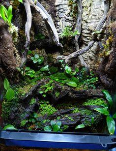 Duff's Terrarium Collection - The Planted Tank Forum Tree Frog Terrarium, Terrarium Tank, Large Terrarium, Terrarium Reptile, Aquarium Terrarium, Hanging Terrarium, Home Aquarium, Planted Aquarium, Orchid Terrarium