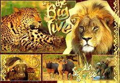 Seen the BIG 5 wild in the Kruger National Park, South Africa! African Animals, African Elephant, African Safari, African Art, Best Honeymoon Resorts, African Leopard, South Africa Safari, Best Places To Vacation, Safari Animals