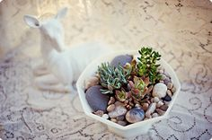 More Design Please - MoreDesignPlease - DIY : Succulent Garden