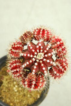 Cactus #NWvintage