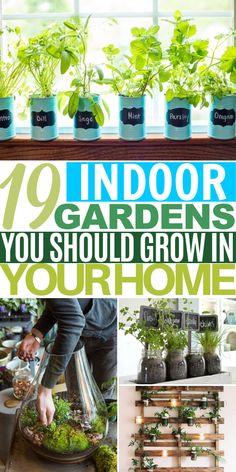 Indoor Gardens for Small Spaces Fruit Garden, Vegetable Garden, Garden Plants, Indoor Plants, Indoor Gardening, Landscape Design, Garden Design, Diy Projects, Mint