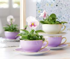 Cup of Cheer Garden News, Pansies, Wine Recipes, Cheer, Tea Cups, Home And Garden, Design Ideas, Cottage, Easter