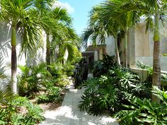 Beginner's Guide To Tropical Landscaping Design Plans – My Best Rock Landscaping Ideas Tropical Backyard Landscaping, Side Yard Landscaping, Tropical Garden Design, Garden Landscape Design, Tropical Gardens, Small Courtyard Gardens, Outdoor Gardens, Garden Deco, Mediterranean Garden