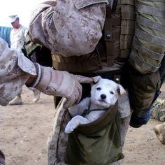 Militairy puppy