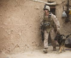 Cpl. Quinton McCloud and Zamp, his military working dog, search the inside of a compound for signs of insurgency during Operation Grizzly IV July 30. Operation Grizzly was a counter-insurgency operation to deter enemy activity, establish a presence and gather human intelligence. McCloud is a dog handler with 2nd Law Enforcement Battalion, 2nd Marine Expeditionary Force (Fwd). (Photo by Sgt. Bobby J. Yarbrough)