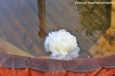 Versoja Vaahteramäeltä White Flowers, Garden, Garten, Gardens, Tuin, Yard