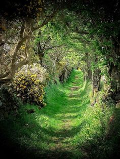 """maxitendance: """" The Green Old Road by Cat-Art """""""