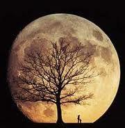 Boom bij volle maan