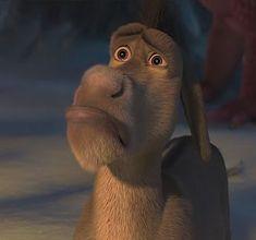 Memes Shrek Donkey Ideas For 2019 Burro Do Shrek, Shrek Donkey, Memes Shrek, Funny Memes, Hilarious, Hug Meme, Reaction Pictures, Funny Pictures, Funny Pics