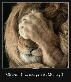 Oh nein!!!!... morgen ist Montag!! | Lustige Bilder, Sprüche, Witze, echt lustig