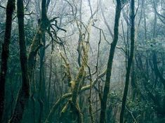 Great great photographer Axel Hutte has a new show in Franckfort these days, exploring his recurring thematics, man made change in our envir. Borneo, New Mexico, Berlin, Forest Landscape, School Photography, France, Great Photographers, Contemporary Photography, London