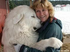 Great Pyrenees, Gorgeous!