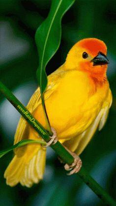 ***GIF***Bird animation