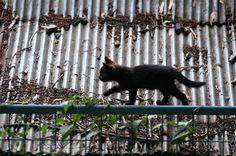 トタン屋根の子猫           #cat #neko #cats ねこ 猫 黒猫 Cute Animal Pictures, Colorful Pictures, Crazy Cat Lady, Crazy Cats, Adorable Animals, Cute Cats, Lots Of Cats, Cat Boarding, Cat 2