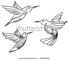 sketch, doodle, hand drawn illustration of hummingbird