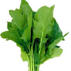 Spinach 'Mikado' Hybrid seeds from Thompson & Morgan - experts in the garden since 1855 Spinach, Plant Leaves, Urban Gardening, Vegetables, F1, Green, Plants, City Gardens, Vegetable Recipes